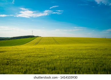 Green and yellow wheat field in spring season under blue sky, wide photo. With copy space