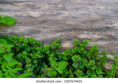 Green young foliage of plants on a background of a dry tree trunk. Spring season, May. Web banner.