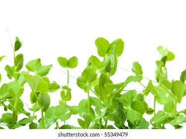 green young pea shoots isolated on white;