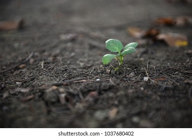 Green young plant growing in soil on nature background