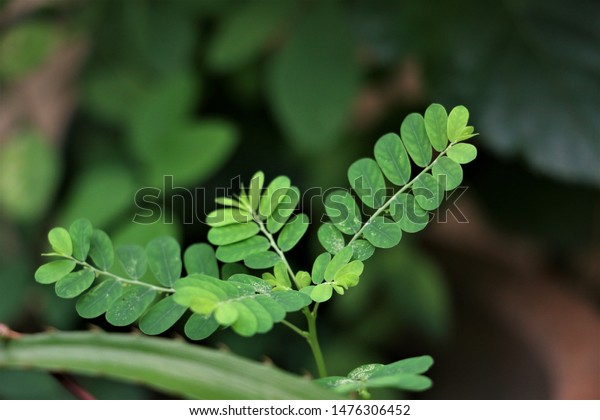 green young small leaves with dark blurry background under natural light