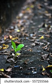 Green young small newborn tree growing on concrete road among dry fallen leaves given concept of the life beginning or strong surviving