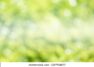 Greenery abstract background. Blurred and defocus effect for spring concept design .