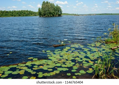 Greenery around the lake with blue water. Lake scape at summer. Natural background