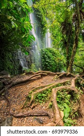 The greenery at Benang Kelambu Waterfall, Lombok, Indonesia