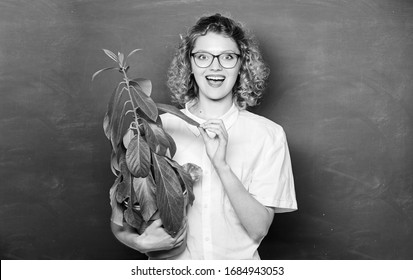 Greenery benefits. Botany and nerd concept. Woman school teacher chalkboard background carry plant in pot. Take good care plants. Botany and biology lesson. Botanical expert. Botany education.