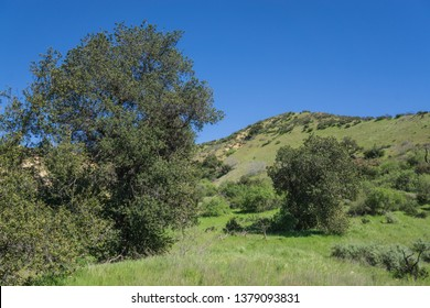 Greenery in the canyons of southern California's Los Angeles County near Santa Clarita.