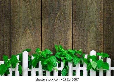 Greenery hanging over white picket fence against rustic wooden background