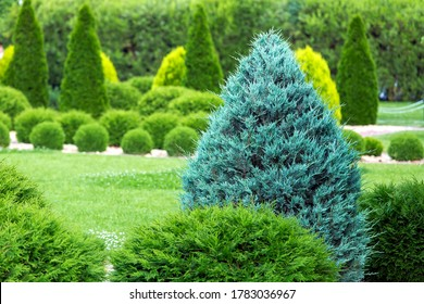 greenery landscaping of a backyard garden with evergreen thuja in a summer park with decorative landscape design close up details, nobody.