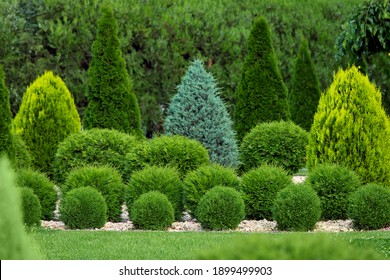 greenery landscaping of a backyard garden with evergreen thuja and cypress in a greenery park with decorative landscape trees and bushes, nobody.