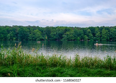 Greenery on the shore of lake Schlachtensee in Berlin, Germany.