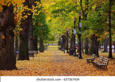 a greenery pathway with benches along the SW Park Ave, Portland, OR, with orange and green autumn leaves on trees and along the street