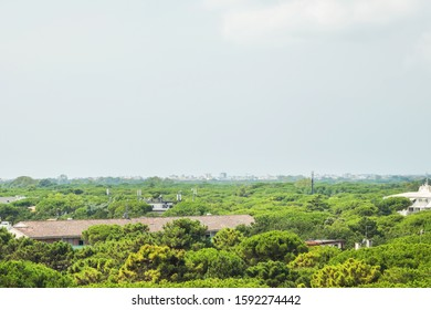 greenery plant and treetop with curly green crown in resort town in summer time aerial view