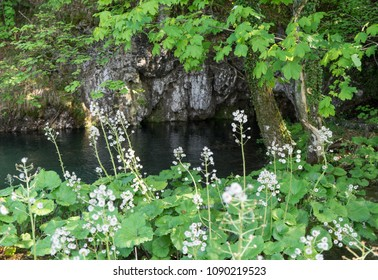 Greenery with tiny white flowers in front of the lake