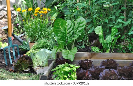 greenery vegetable garden with a spade