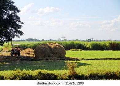 Greenery view of rice field in country side of Asian country