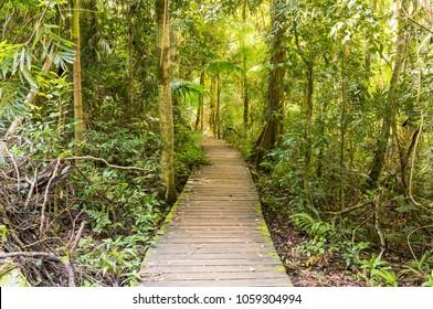 Greenes Falls Bush walk in the D'Aguilar National Park near Mount Glorious, Queensland, Australia