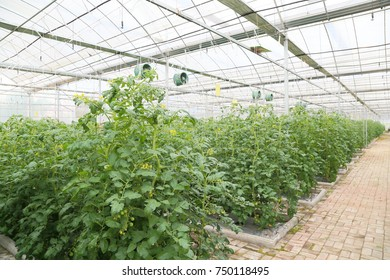 Greenhouse Agriculture