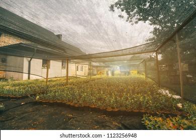 Greenhouse of berries