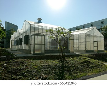 greenhouse with blue sky and sun shine