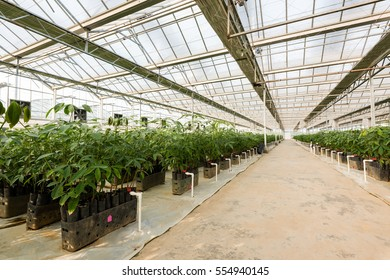 Greenhouse greenhouse cultivation of vegetables