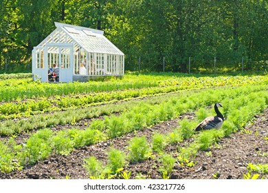 Marvelous Greenhouse Glass Room Images Stock Photos Vectors Complete Home Design Collection Barbaintelli Responsecom