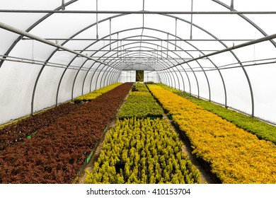 greenhouse full of colorful plants at seedling nursery