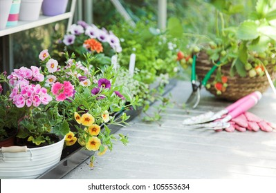 Greenhouse full of flowers, fruits, herbs