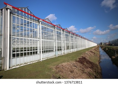 Greenhouse full of roses in Moerkapelle  in the sun with blue sky in the Netherlands