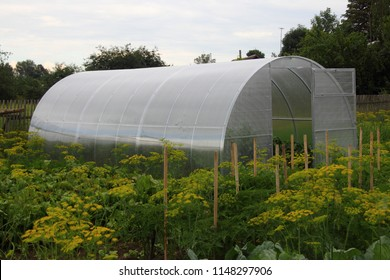 Greenhouse grey polycarbonate panel with the door open at their summer cottage on a background of fennel and garden beds to grow vegetables, life in the village, subsistence farming
