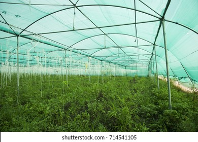 Greenhouse for growing plant.