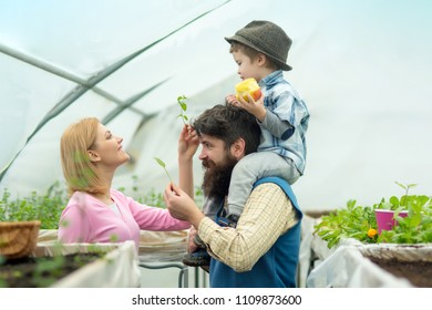 Greenhouse Hydroponic system. Greenhouse structure factory, Manufacture and Build. Glasshouse Restaurant, Glasshouse Megastore. Happy Family in Garden Greenhouses. Greenhouse Market.