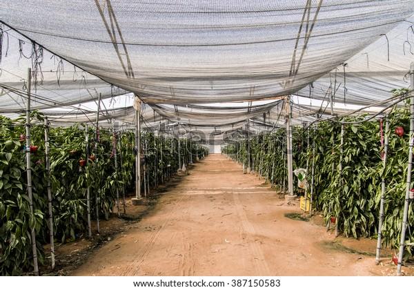 Magnificent Greenhouse Israeli Negev Desert Stock Photo Edit Now 387150583 Home Interior And Landscaping Oversignezvosmurscom