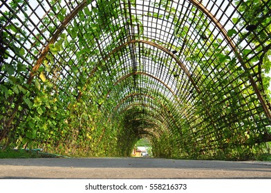 greenhouse made of bamboo