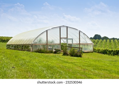 A greenhouse or nursery at a wine vineyard.