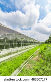 Greenhouse planting greenhouses and the blue sky white clouds