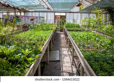 Greenhouse - a room with a transparent glass roof for growing plants. Winter Garden.