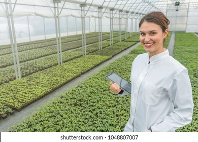 Greenhouse Seedlings Growth. Female Agricultural Engineer using tablet