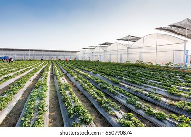 Greenhouse greenhouse greenhouse soilless cultivation of vegetables