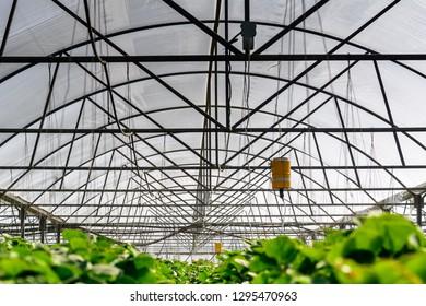 Inter Grow Images, Stock Photos & Vectors | Shutterstock