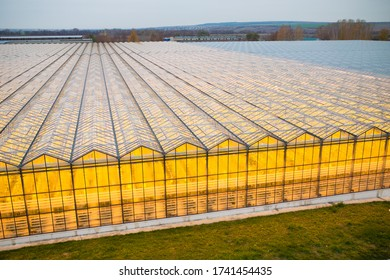 The greenhouse in the summer