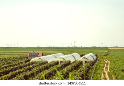 Greenhouse tunnels from polythene, agricultural field