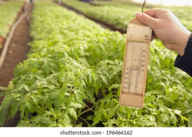 Greenhouse for vegetables and plant nursery - temperature measuring -  tomato on background