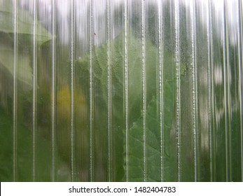Greenhouse wall made of polycarbonate with different condensate.  Various refraction and reflection of light in polycarbonate. somewhere lurking greenhouse plants. shallow focus. macro.