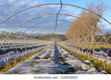 A greenhouse in the winter. Nothing grows in the tunnel and the plastic foil is rolled up.