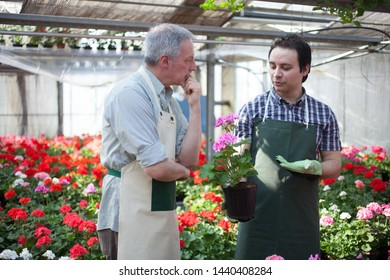 Greenhouse workers having a discussion on a plant
