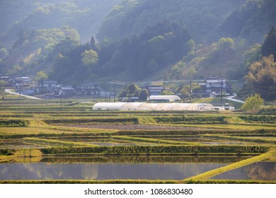 Greenhouses behind flooded rice field in rural Japan