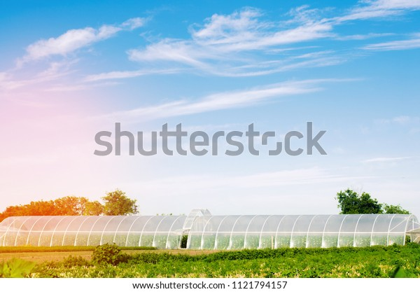 greenhouses in the field for seedlings of crops, fruits, vegetables, lending to farmers, farmlands, agriculture, rural areas, agro-industrial complex. winter crops
