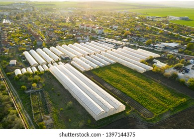 Greenhouses lined up in row, covered with transparent film of growing vegetables and fruits aerial view. Texture of the roofs of greenhouses field background. Farming, bio products. Drone