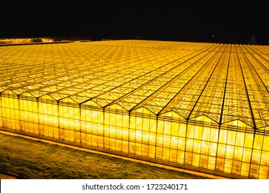 Greenhouses at night in summer